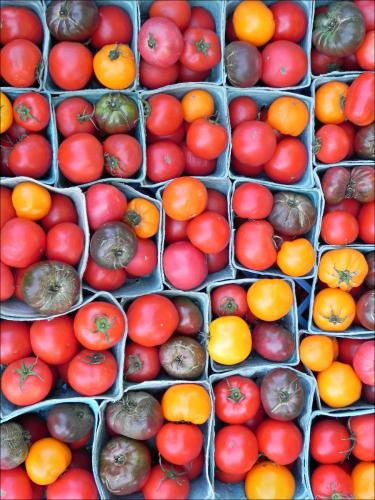 Tomato Tribe