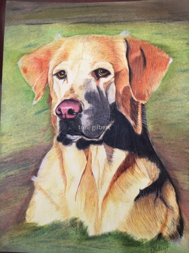 Yellow Lab by Toni Gilbert