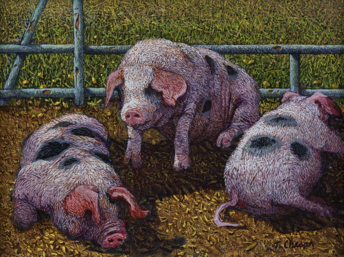 Spotted Pigs (large view)