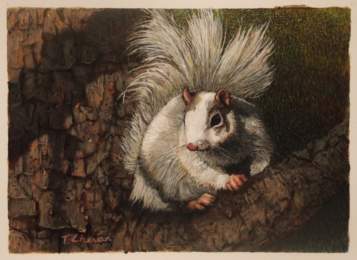 The White Squirrel by Tom Chesar (large view)