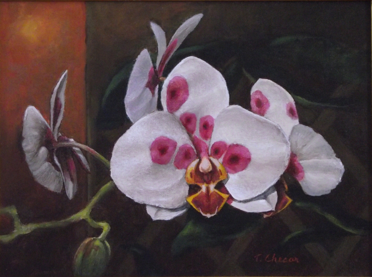 """Moth Orchid"" (large view)"