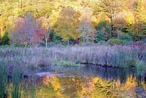Shady Pond