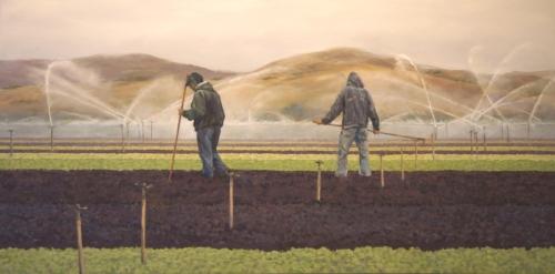 Lettuce Fields in the Morning