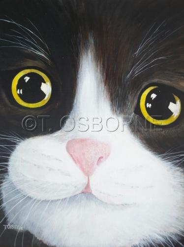 Tuxedo The Cat