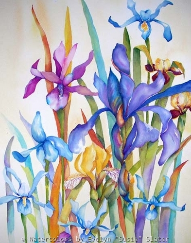 Iris #2 by Watercolors by Evelyn Susie Slater