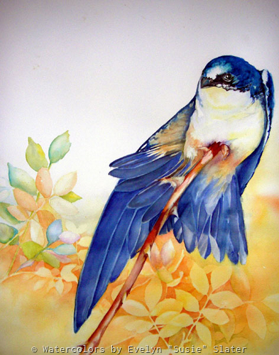 Tree Swallow by Watercolors by Evelyn