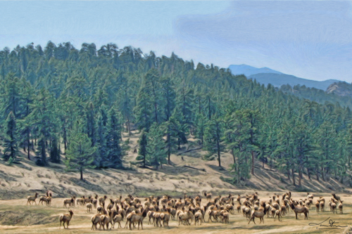 Colorado Elk Herd by Tom Stevens Fine Art