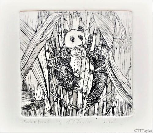 Panda in the Bamboo