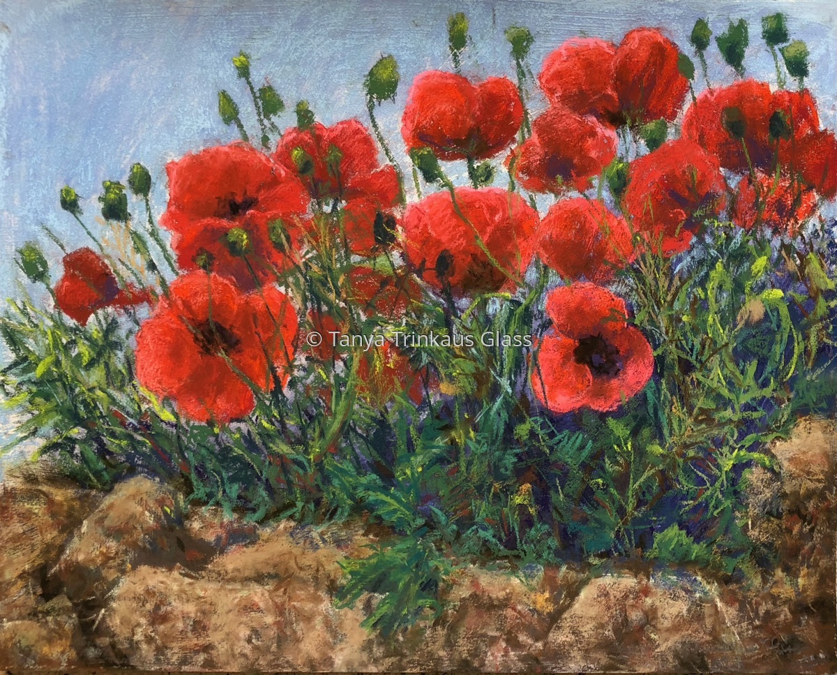 Poppies in Les Baux, France. (large view)