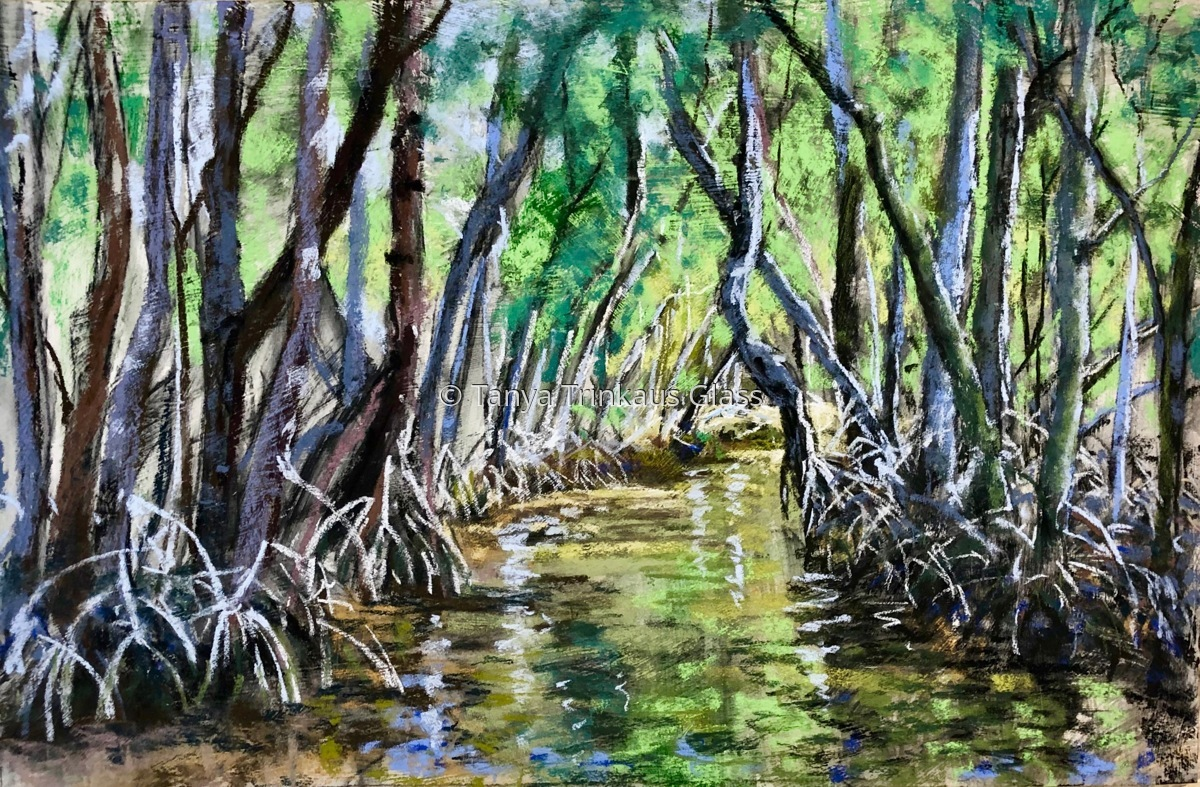 The Glow in the Mangroves Jungle. (large view)