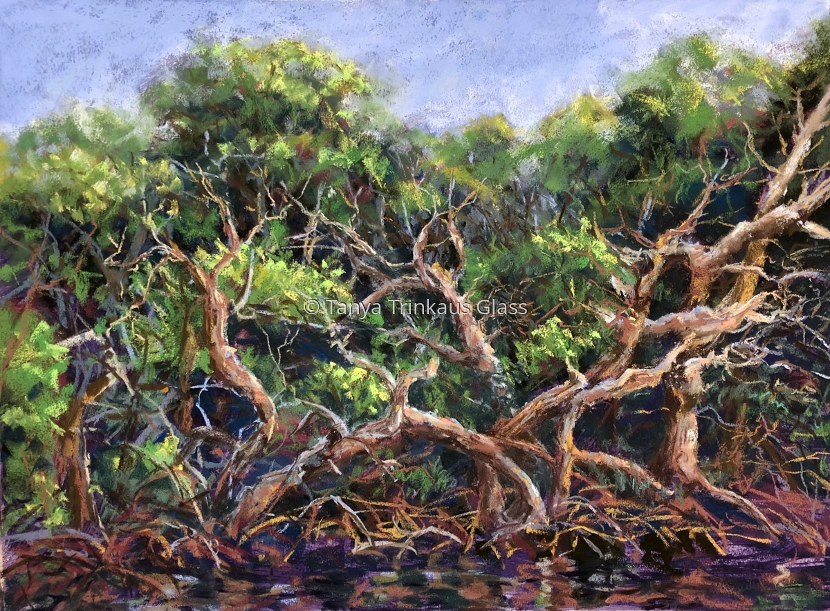 A Tangle of Mangroves (large view)