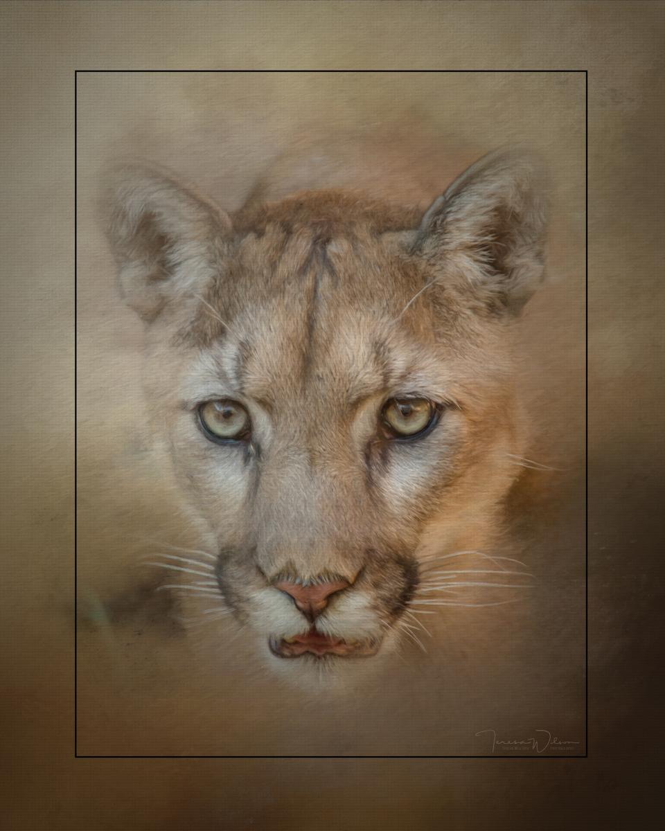 Portrait of a Mountain Lion (large view)