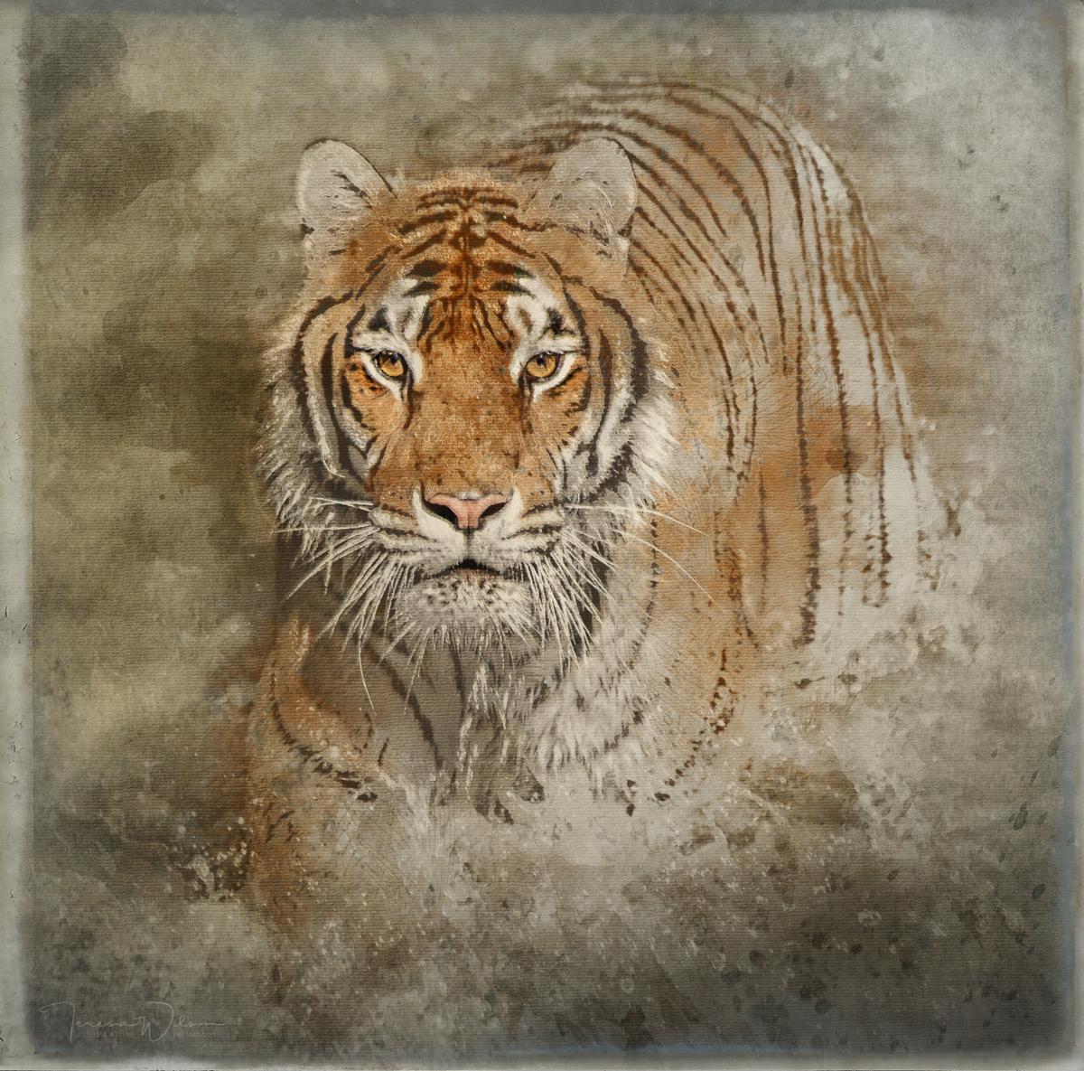 Tiger Splash (large view)