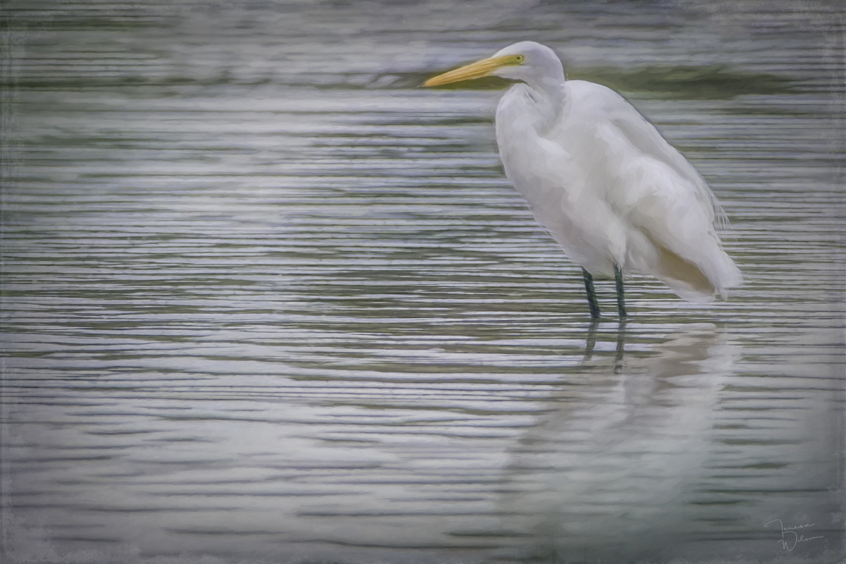 Egret in the Shallows (large view)