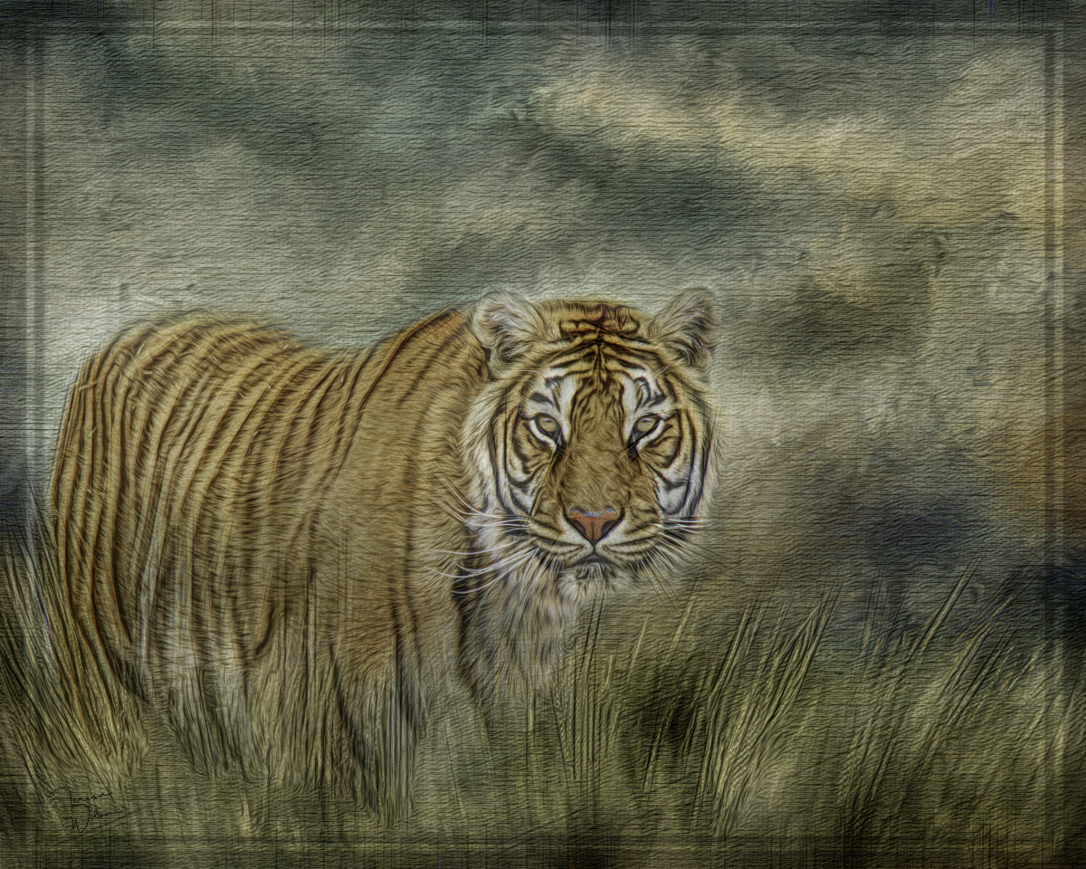 Tiger in the Grass (large view)