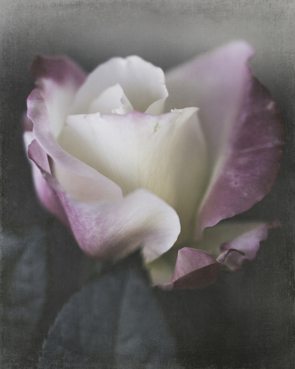 Stop and Smell the Roses by TL Wilson Photography (large view)