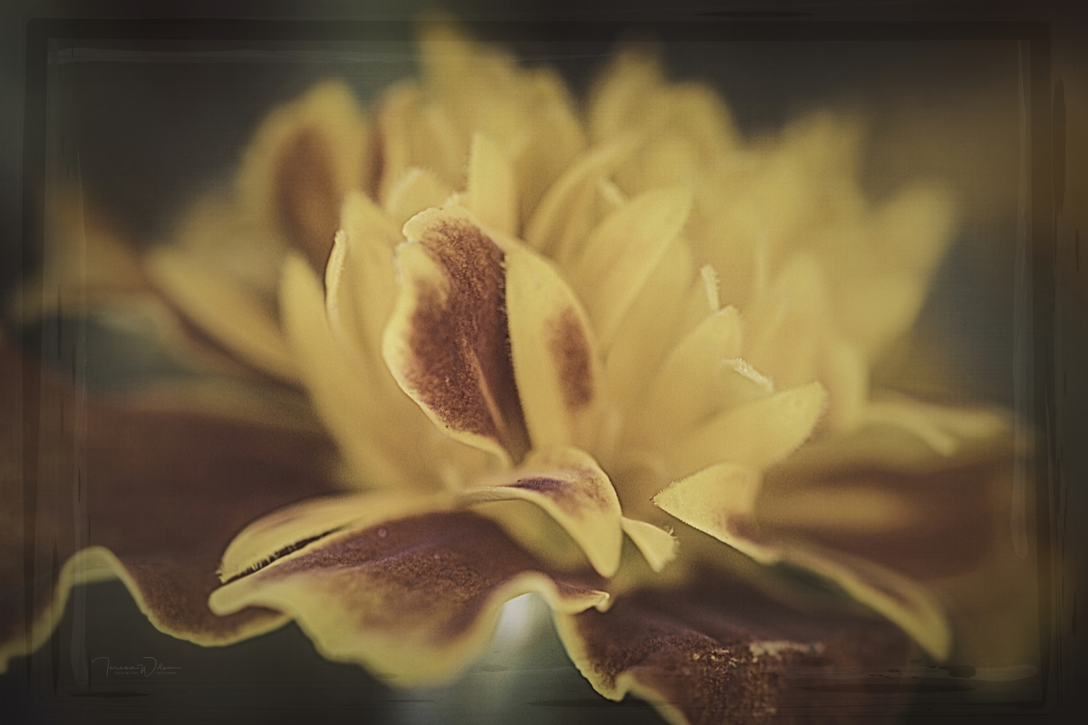 Marigold Magic by TL Wilson Photography  (large view)
