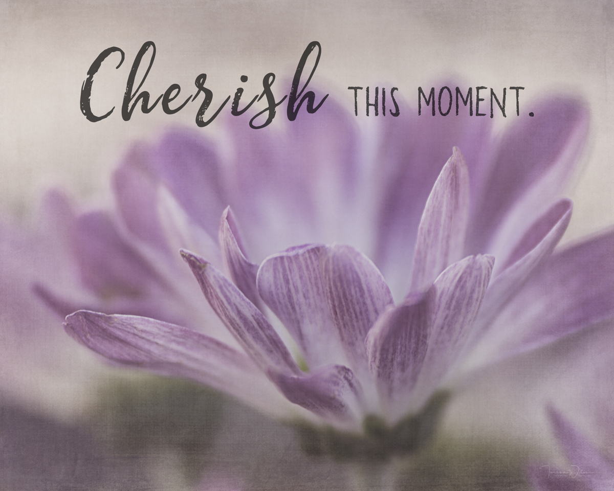 Cherish This Moment by TL Wilson Photography  (large view)