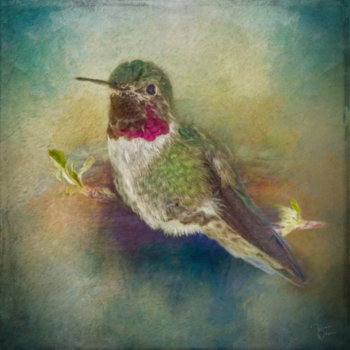 Painted Hummingbird
