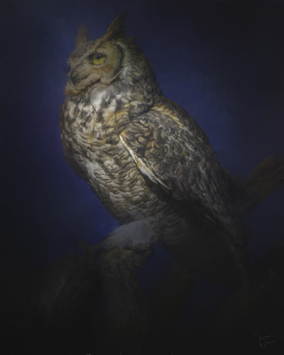 Great Horned Owl Caught In The Moonlight