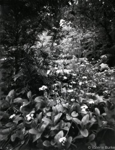 floral Falls copy.jpg
