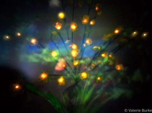 Night Garden by Valerie Burke