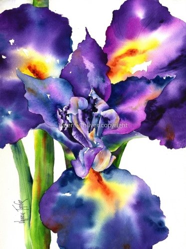 Opening Day of the Iris