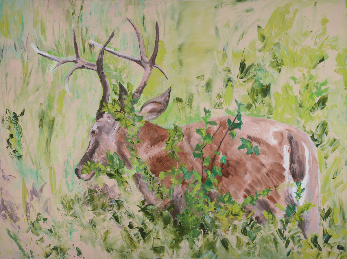 """White Tailed Deer"" (large view)"