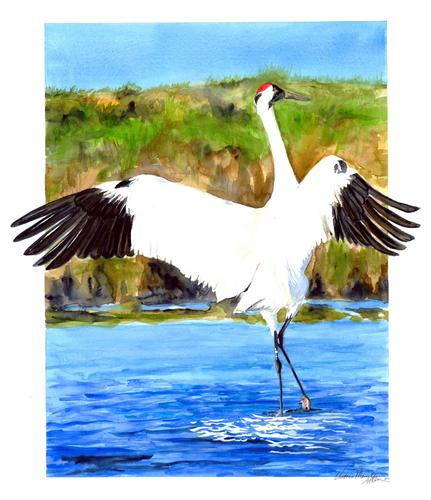 WHOOPING CRANE (large view)