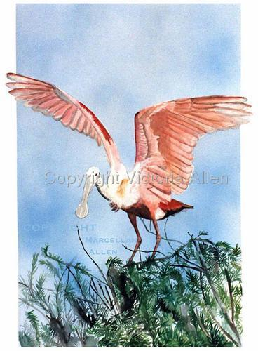ROSEATE SPOONBILL (large view)