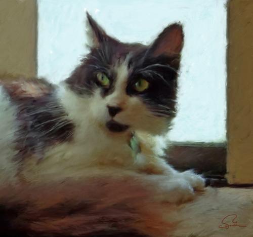 Carley's Cat