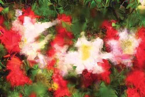 Salvia and White Lilies