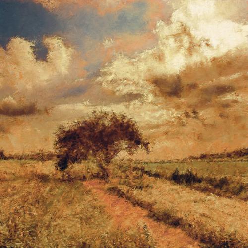 Tree In a Dry Field