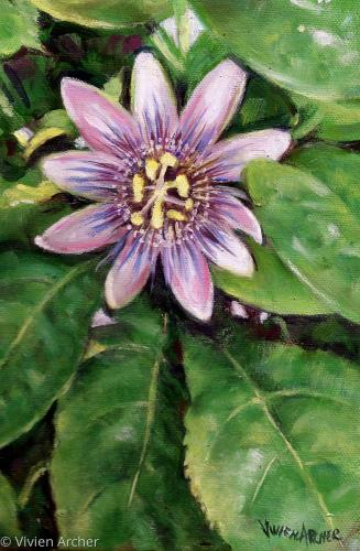 Passion Flower by Vivien Archer Fine art