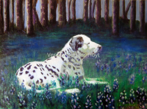 Dalmatian Meadow
