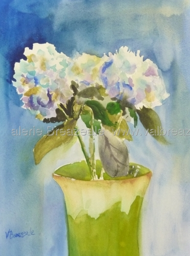 Blue Hydrangias