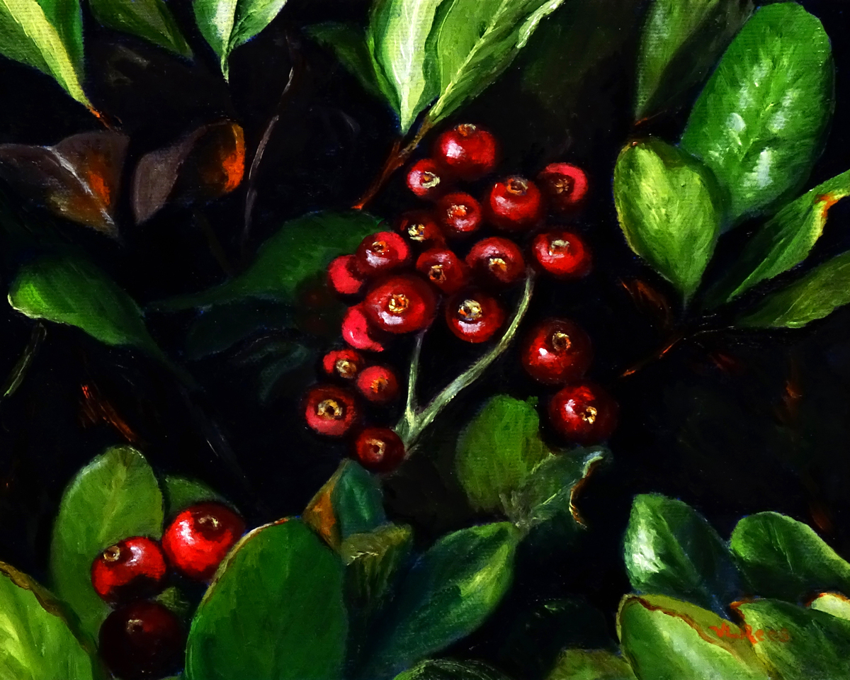 Cotoneaster (large view)