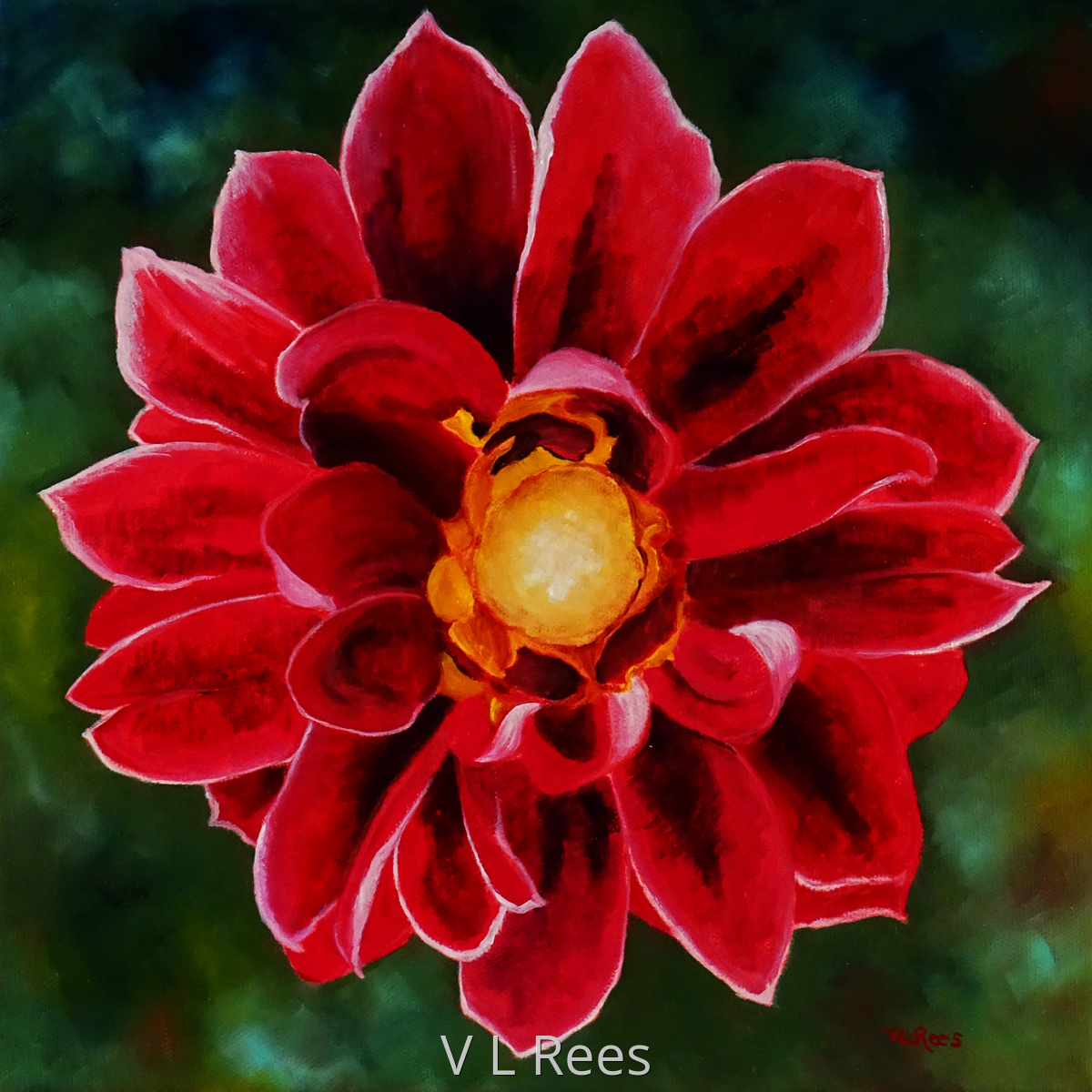 Giverny Red Dahlia (large view)