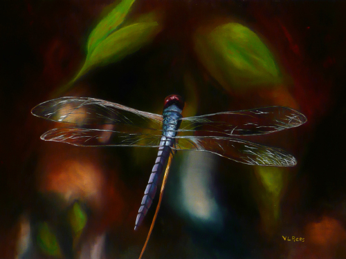 L. Johnson Dragonfly (large view)