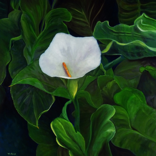 Calla Lily (large view)