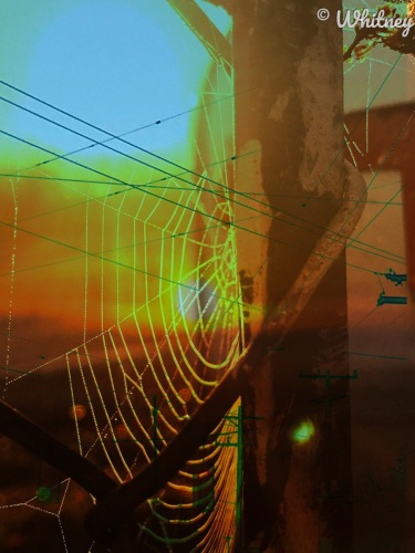 Digital Photography - Spider Morning