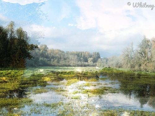 Digital Photography - Fall light on Pond by Whitney Hessong