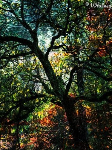 Fall at Kelly Point Park