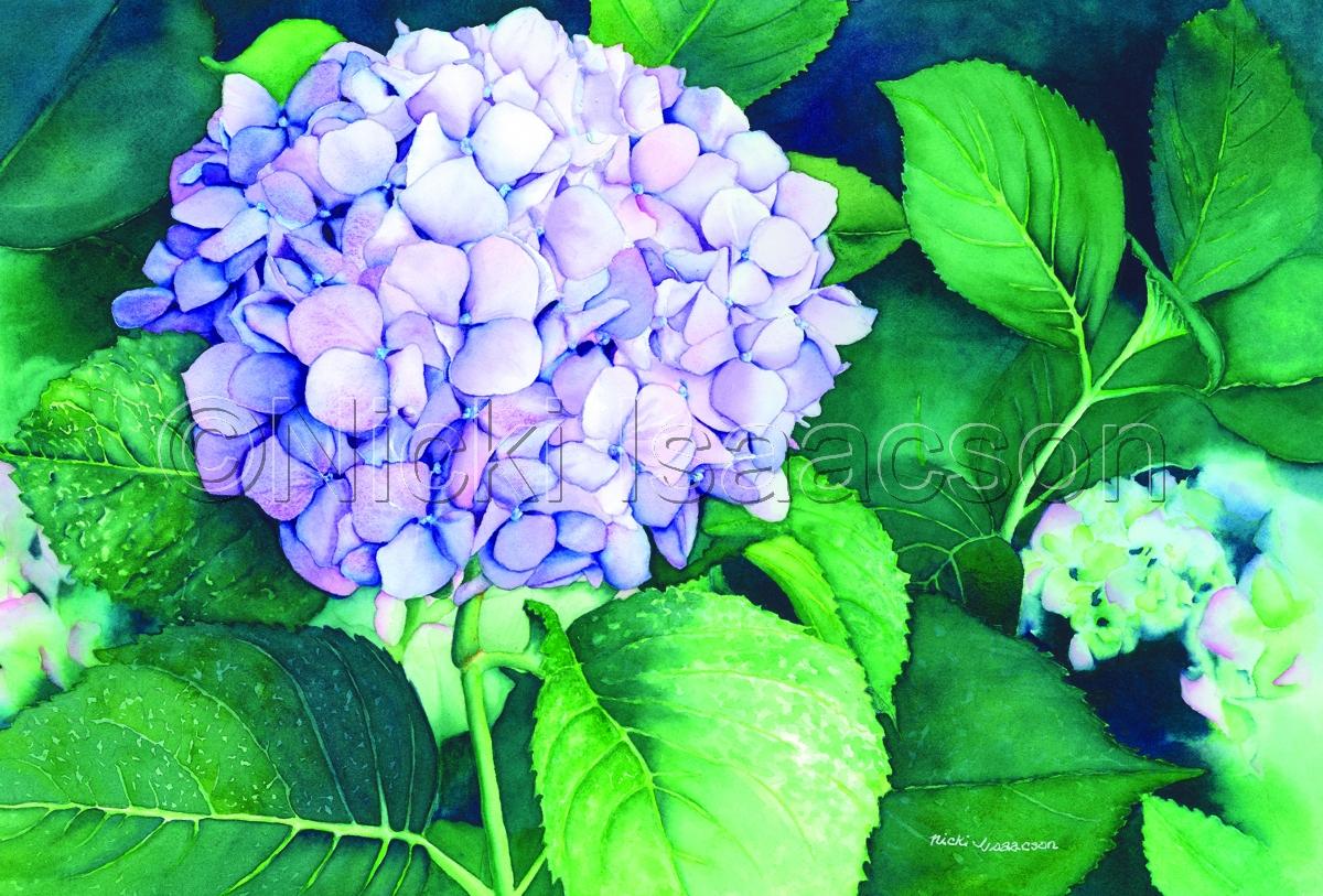 Lavender_Blues (large view)