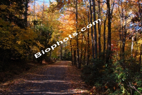 Country Lane in Fall Colors