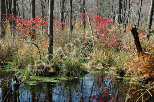 Fall Colors at Thompson Pond, NY by William Dederick