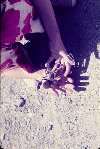 Child with Tarantula