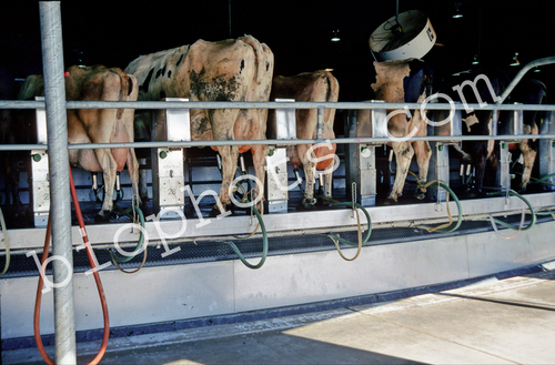 Rotary Milking Machine