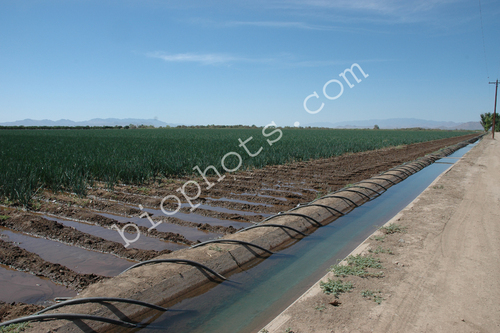 Row irrigation