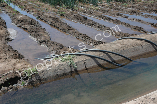 Siphons for Row Irrigation